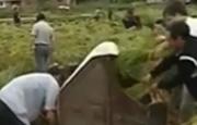 袁隆平:三五年亩产水稻达千公斤