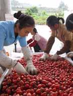 工人在对农产品进行评定
