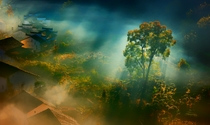 《浴光的树》 摄影:崔松歌