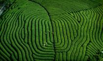《大地指纹》 摄影:陈新民