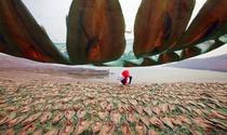 《舌尖上的海鲜》 摄影:劳雪