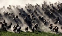 《万马奔腾内蒙古》 摄影:何炳刚