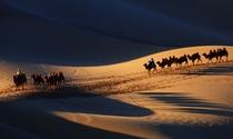 《大漠驼影》 摄影:潘奕锋