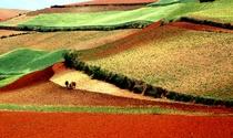 《编织红土地》 摄影:李乃松