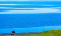 《赛湖的韵律》 摄影:茹鹏生