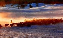 《冬牧》 摄影: 谭康新