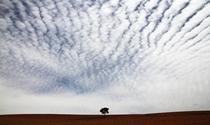 《一棵树》 摄影:钱自余