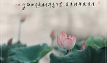 《清莲》 摄影:聂小倩