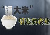 镉大米引发的农业污染思考