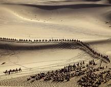 《驼群》 摄影:蒋永福
