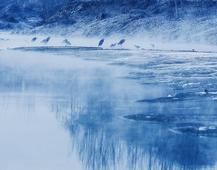 《冬之鹭》摄影:姬建强