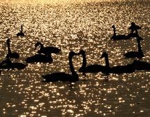 《别梦》 摄影:肖社会