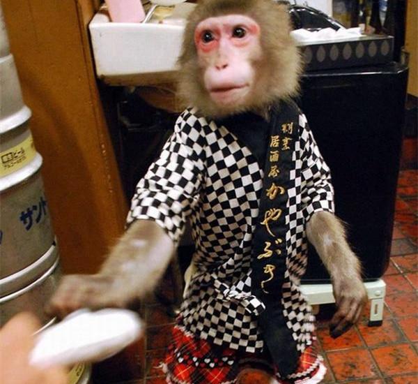 """""""猴子司仪""""既能迎客又能表演"""