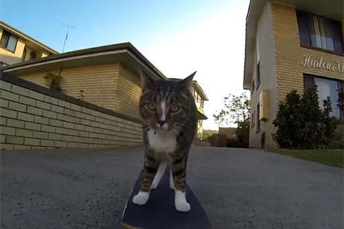 滑板猫咪技巧高超引围观