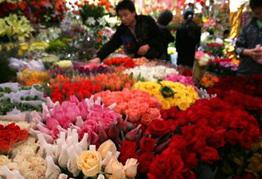 国产玫瑰大幅减产 价格或遇史上最贵
