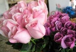 单身人士:爸妈让我去送玫瑰