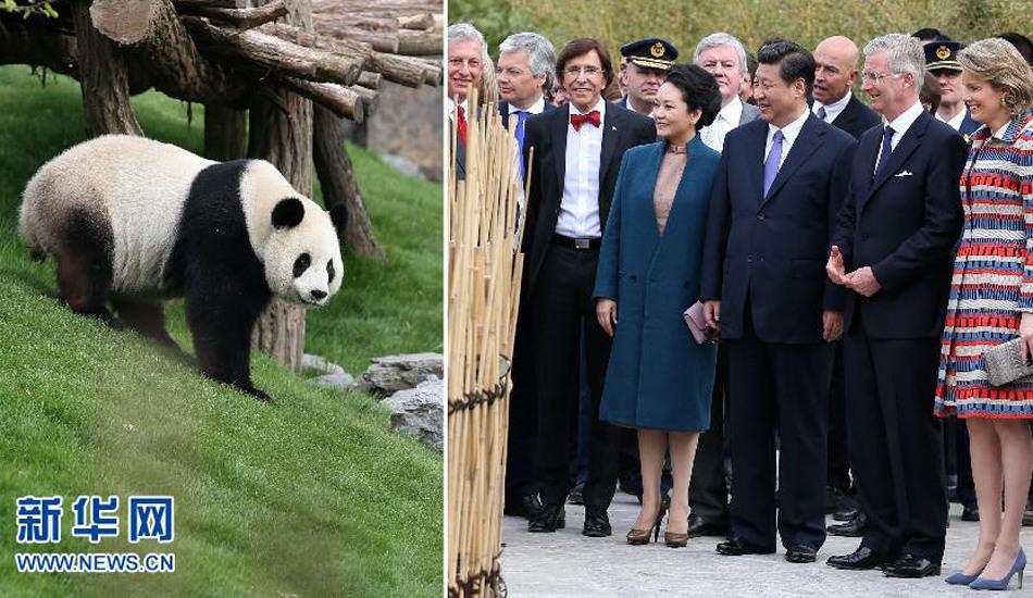习近平和比利时国王共同出席大熊猫园开园仪式