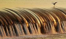 《水上芭蕾》 摄影:郑金强