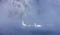 《天鹅之美》 摄影:周海