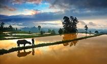 《田园牧歌》 摄影:杨秀方
