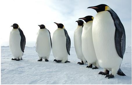 巨型企鹅 史前企鹅身高可达2米