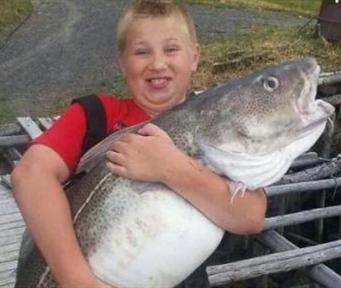 巨大鳕鱼 10岁少年捕获重达22公斤