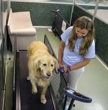 肥胖宠物要减肥 美国宠物减肥夏令营兴起