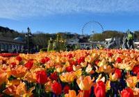 今年开满爱宝乐园整个花园的郁金香有120万株多,比去年栽植的郁金香多20万株。红色、紫色、黄色等110种,五彩缤纷,跟往年相比更加丰富鲜艳,为游客们带来了春天浪漫的气息。
