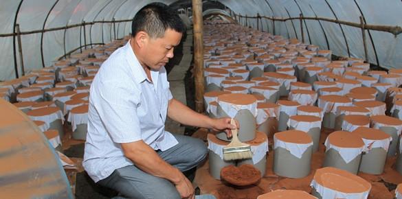 建立责任利益共同体 无限极推动中草药产业化种植