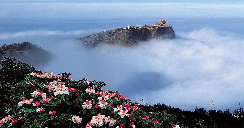 春季峨眉山18万亩杜鹃盛开 姹紫嫣红惹人爱