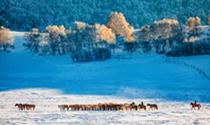 《雪域牧歌》摄影:王士波