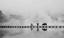 《古桥》摄影:王延川