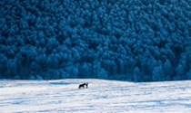 《踏雪归途》 摄影:董双印