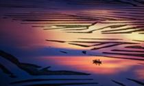 《梦幻滩涂》 摄影:翁顺程