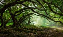 《老榕树下》 摄影:梁晓鹏