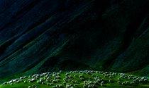 《戈壁珍珠》 摄影:汪顺陵