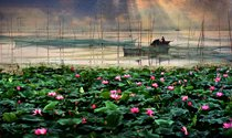 《鸟语荷香微山湖》 摄影:王雪峰
