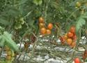 陵水现代农业基地