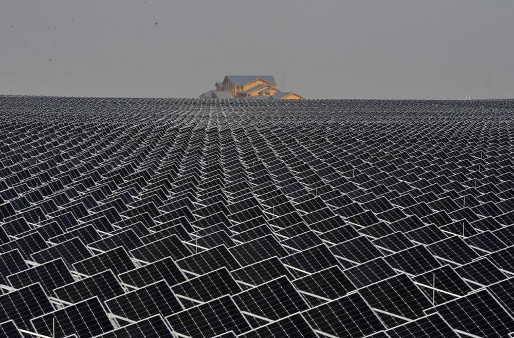 银川十万亩光伏板下种枸杞 发电绿化两不误