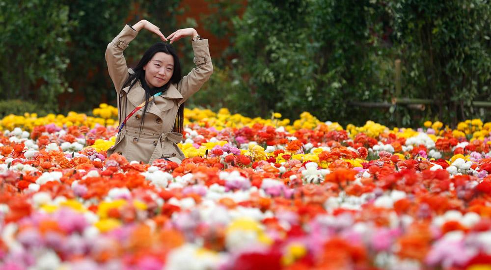 北京世园会开园 民众畅游花海