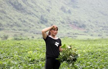 80后女孩租800亩荒山 带动村民脱贫致富