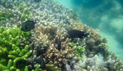 """探访海南陵水""""海洋牧场"""" 珊瑚保育区"""