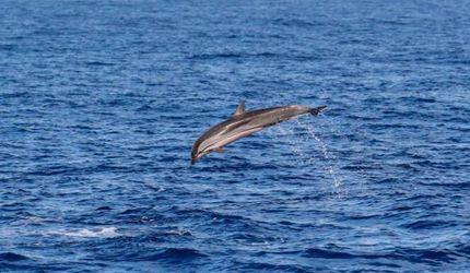 中国科学家进行南海深潜鲸类科考