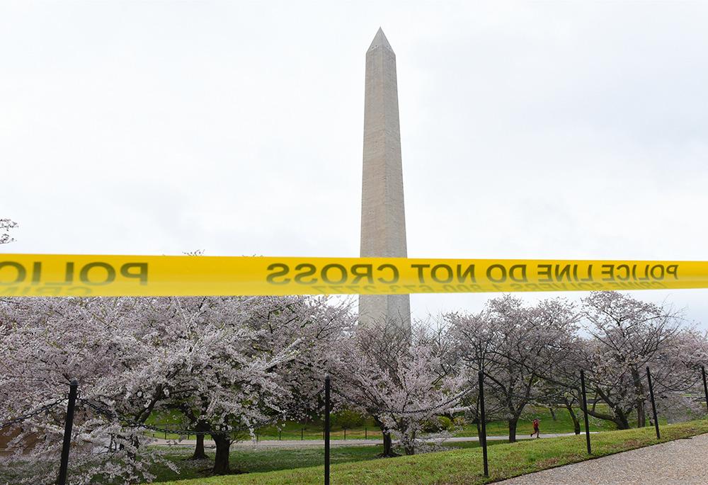 """华盛顿""""樱花季""""因疫情提前结束"""