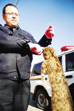 民警查获商家出售的野山猫做的标本