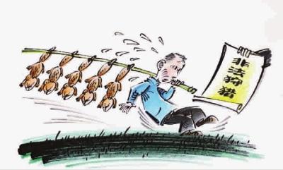 漫画猎杀近百只黄鼠狼犯非法v漫画罪获拘役半木兰走男子暴图片