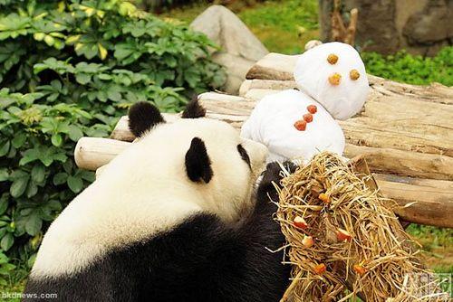 香港海洋公园动物欢度圣诞 可爱指数爆表(图)