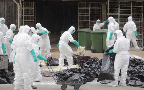 港媒:香港鸡场检测七成样本零感染有望端午复市