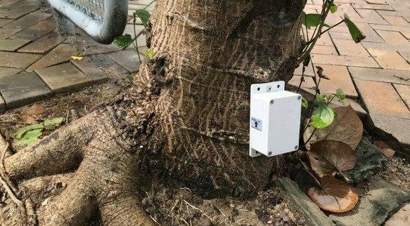 """港府将为8000棵树安装传感器 """"站不稳""""一斜便知"""