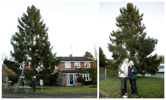 英夫妇搬家种下圣诞小树 35年后成参天大树(图) - - 旭在东北 - 旭在东北原创音画博客(*^_^*)